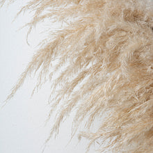 Load image into Gallery viewer, Pampas Grass Natural
