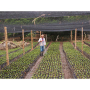 Colombia Planadas Tolima Ground Coffee