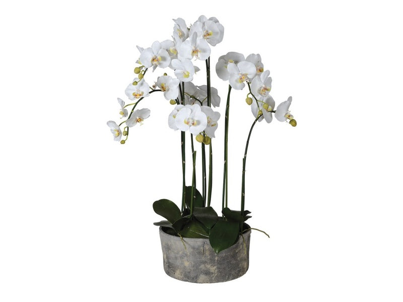 White Orchid in Round Grey Cement Planter