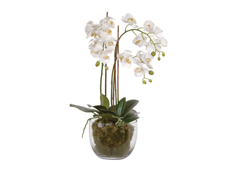 White Orchid with Moss in Glass Bowl