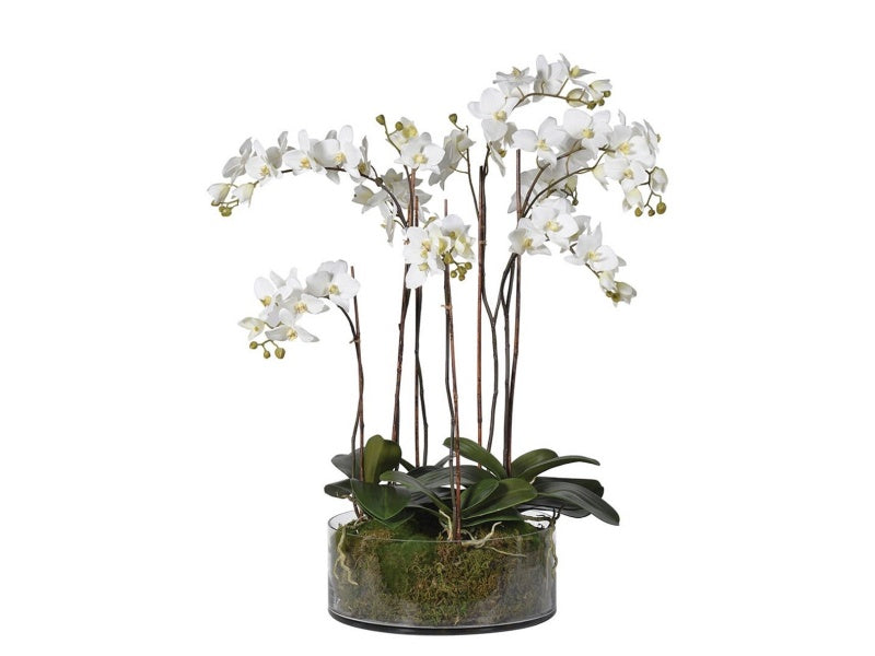 White Orchid with Moss in Shallow Glass Cylinder Bowl