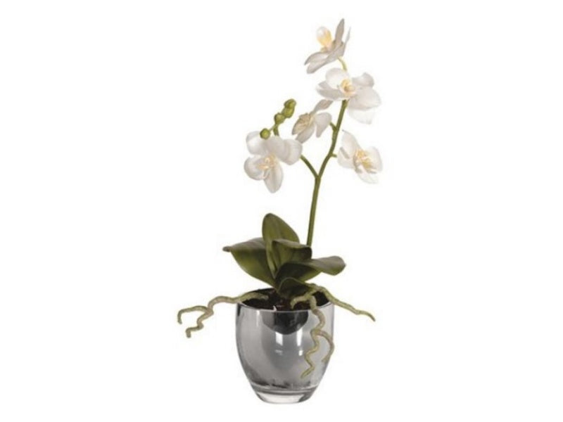 White Orchid in Glass Vase I