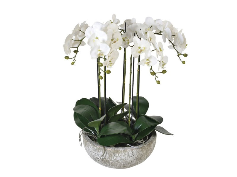 White Orchid in Stone-look Bowl I