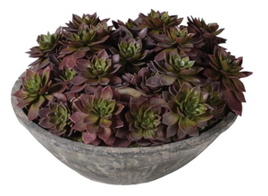 Brown and Green Echeveria Plants in Grey Cement Bowls