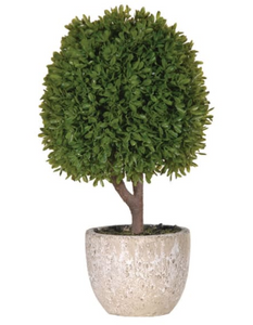 Green Miniature Boxwood Ball in Stone-look Pot