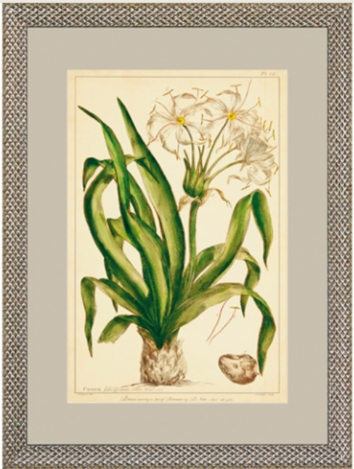 Miller Polianthes II