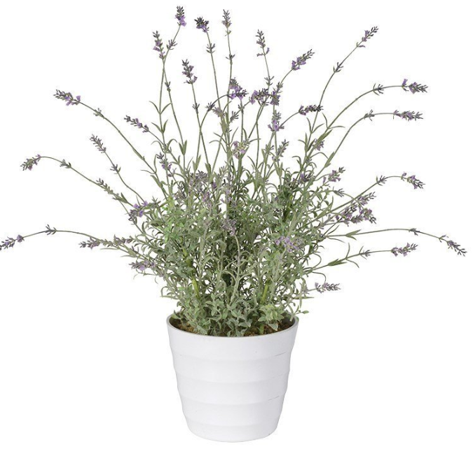 Wild lavender in white pot