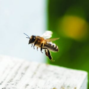 attract bees