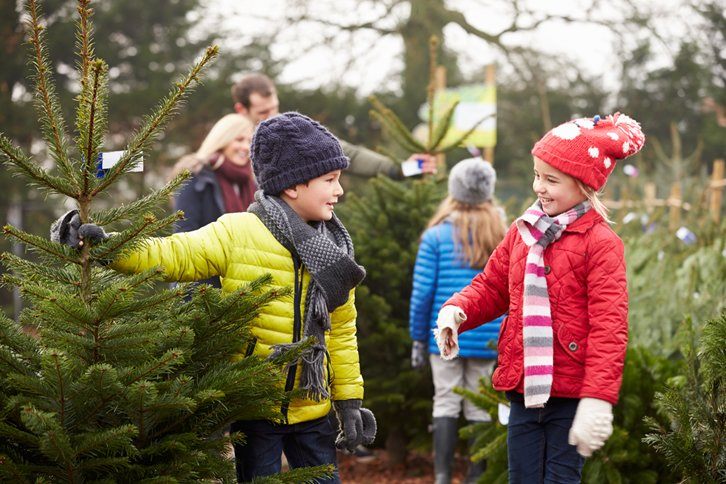 Somerlap Christmas Trees available from December 5th