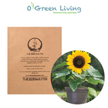 Flower Seeds for Planting - FL452 Sunflower 'Bambino'. O' Green Living - Seed Shop Singapore.