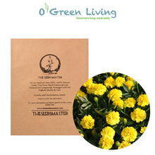 Flower Seeds for Planting - MAR259 French Marigold 'Valencia'. O' Green Living - Seed Shop Singapore.