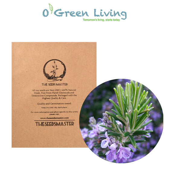 Seeds Master Singapore - PR40 Rosemary (80 Seeds) Herbs