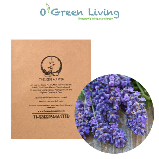 Seeds Master Singapore - VFR70 English Lavendar (270 Seeds) Herbs