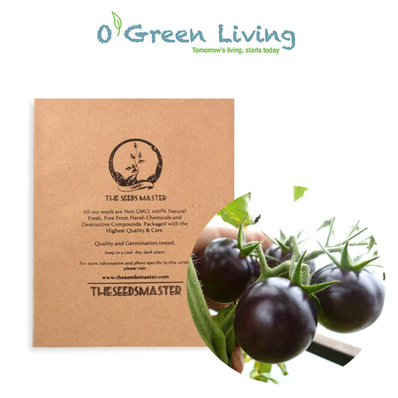 "S113 Tomato ""Black Cherry"" (10-20 Seeds) - Fruit Seeds Singapore"
