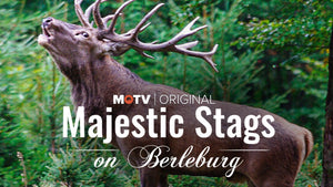 Majestic Stags in Berleburg