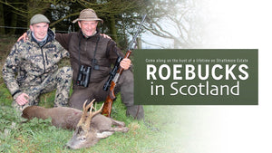 Roebucks in Scotland