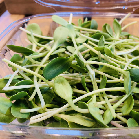 Sunflower Microgreen - 2.5oz