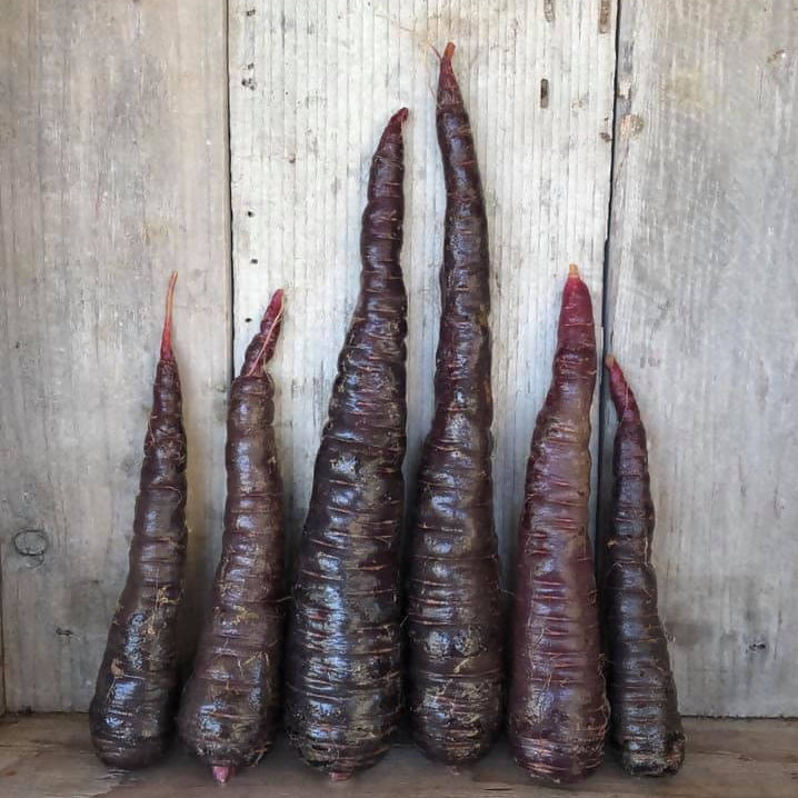 Organic Carrots - Purple - 1 lb.