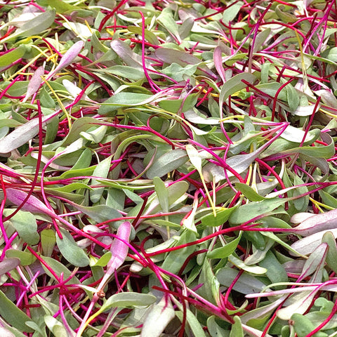 Sunrise Mix Microgreen- 2oz