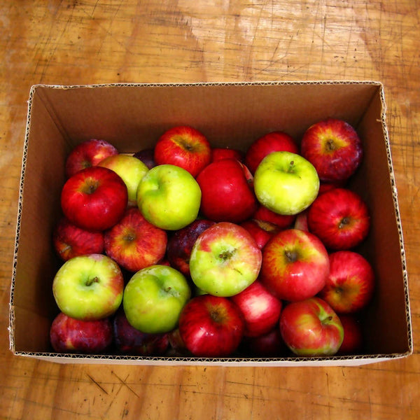 Apples - mixed varieties - certified organic - 3# bag or 10# box