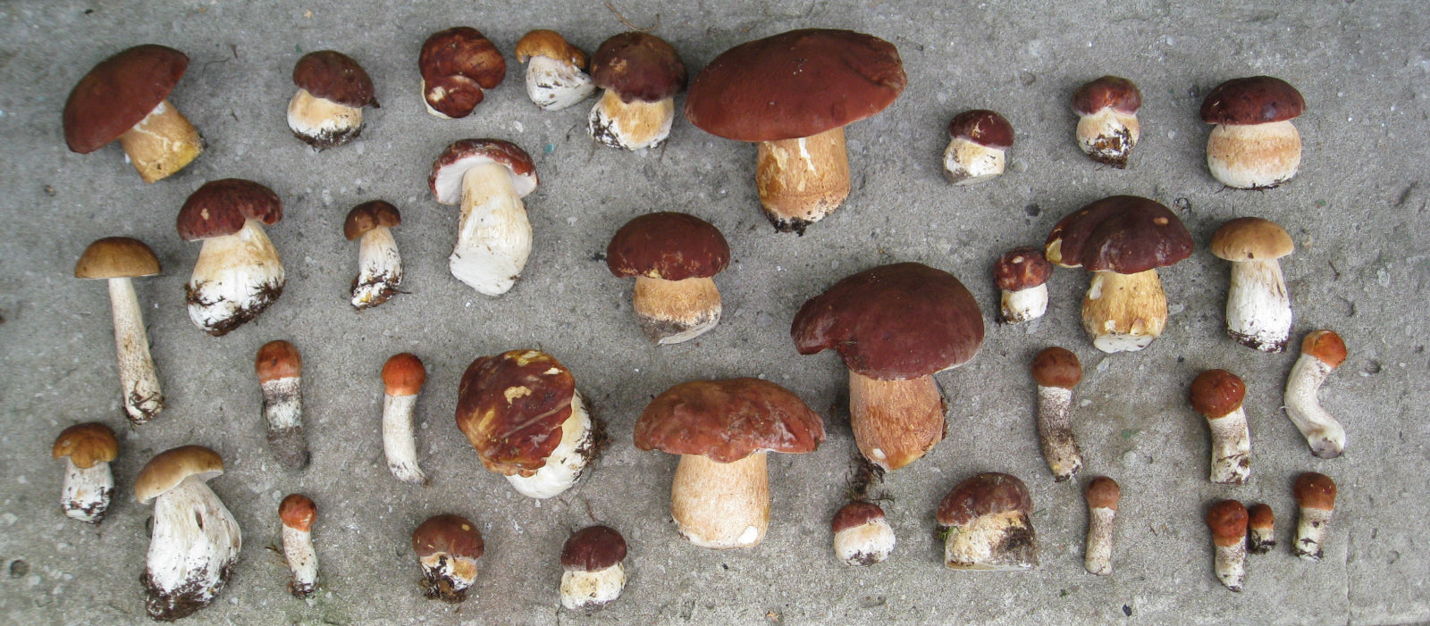 A selection of small brown mushrooms
