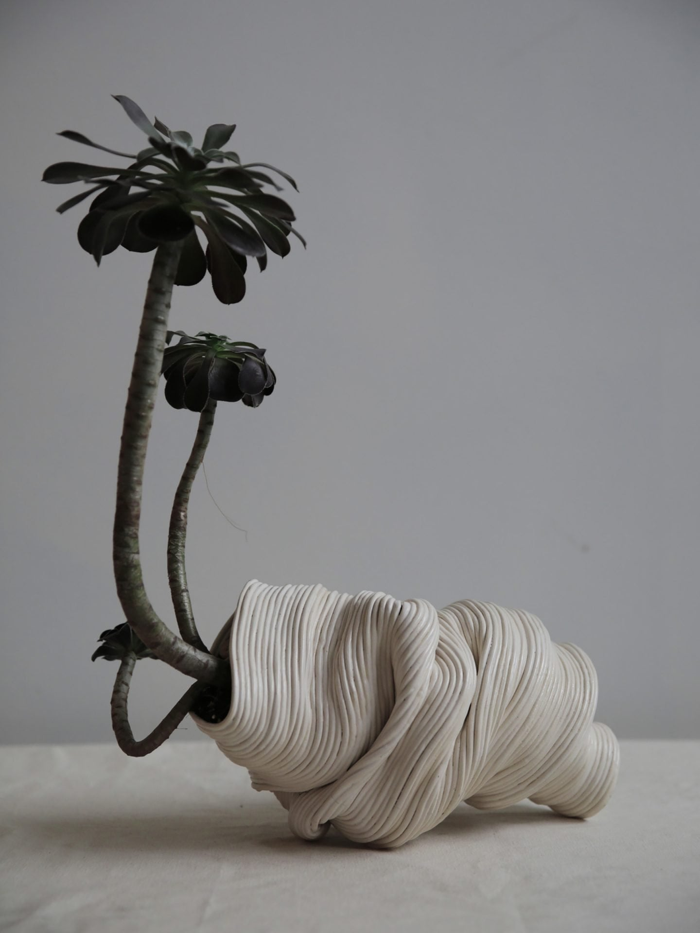 A small tree coming out from a white vase