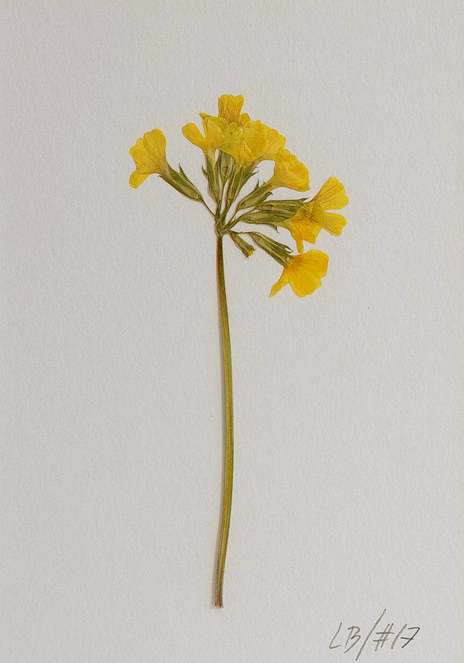 Yellow dried flower with a signature