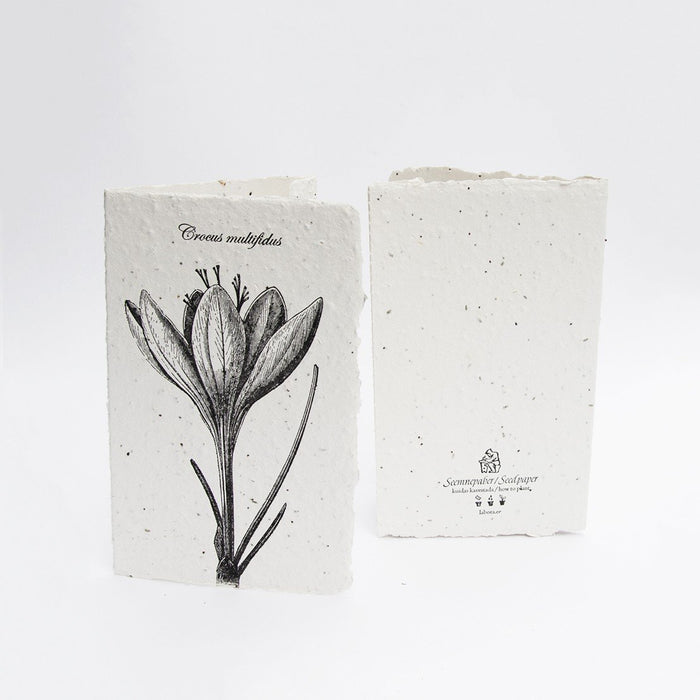 Crocus Seed Card by Labora