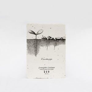 Cucurbita Seed Card by Labora