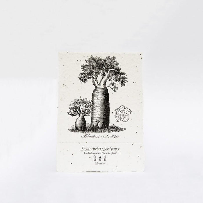 Adansonia Seed Card by Labora