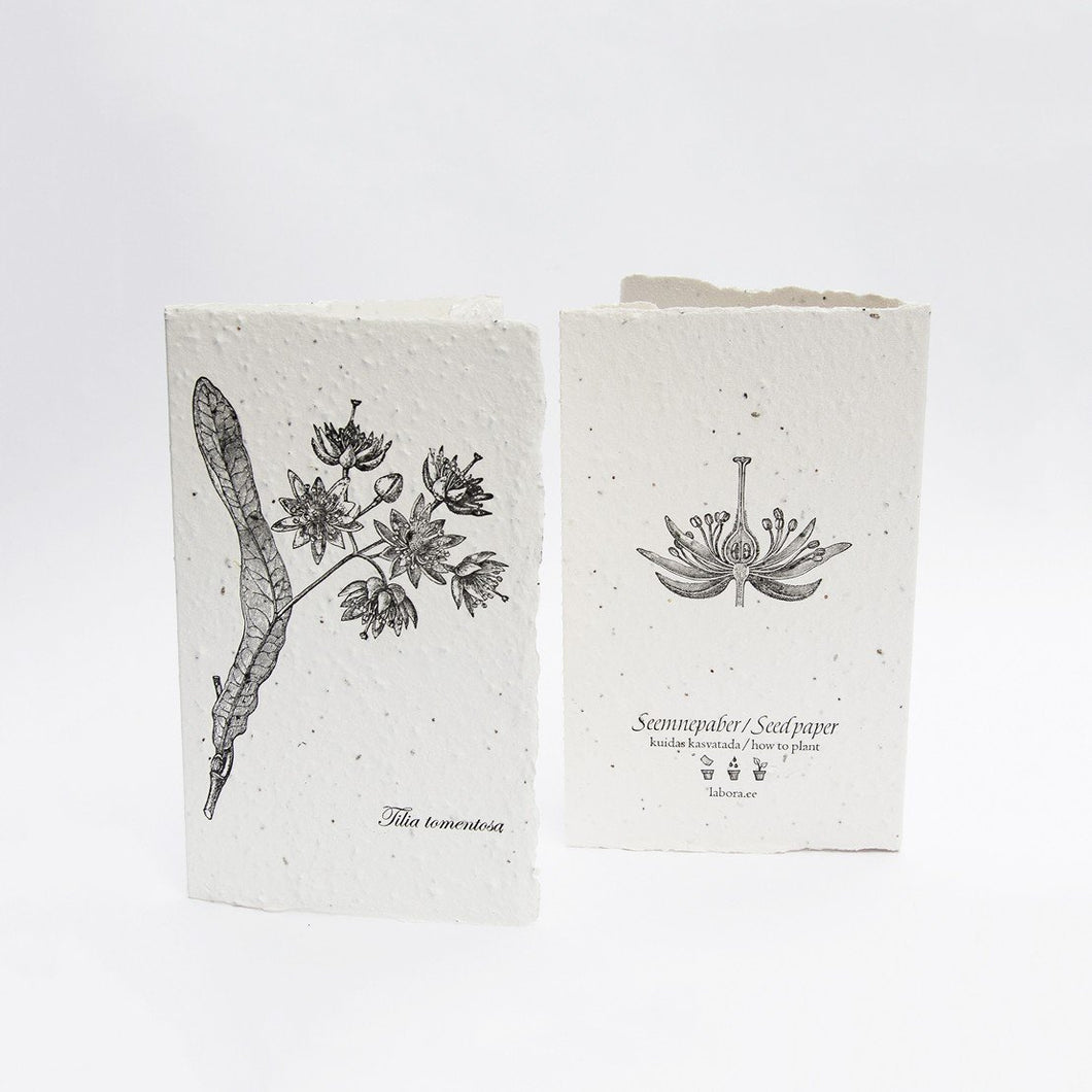 Tilia Tomentosa Seed Card by Labora