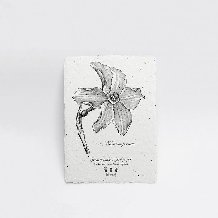 Narcissus Seed Card by Labora