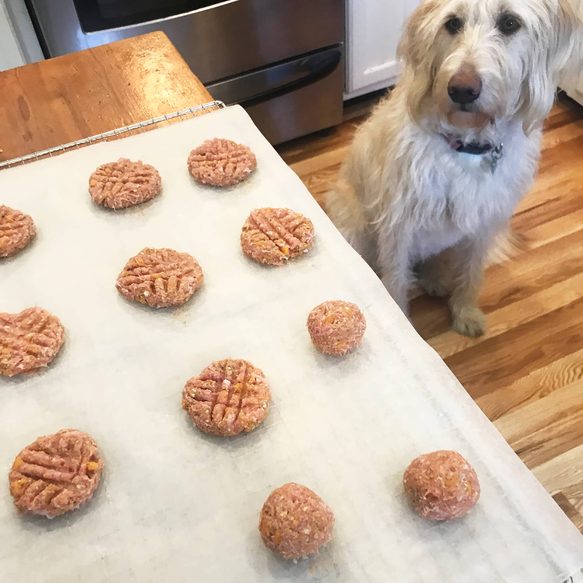 Sandy the dog looking at balls of dough