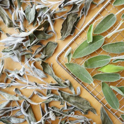 Fresh and dehydrated sage on a dehydrator rack
