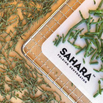 Picture of sea beans