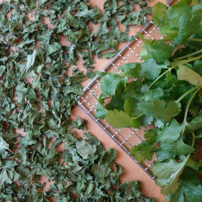 Fresh and dehydrated parsley on a dehydrator rack