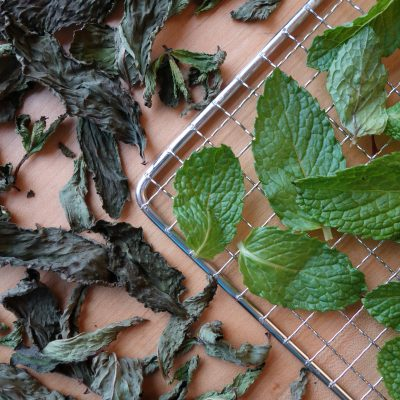 Fresh and dehydrated mint on a dehydrator rack