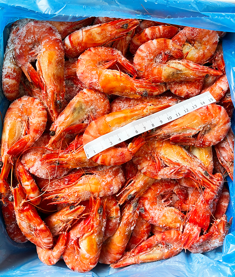 Cooked Australian Tiger Prawns 3KG Box - Frozen