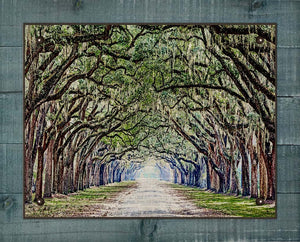 Live Oak and Spanish Moss Canopy Road - On 100% Natural Linen