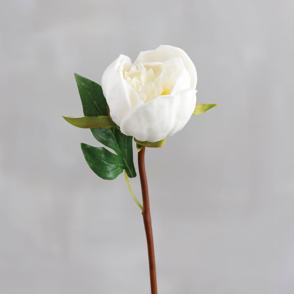 Single White Peony