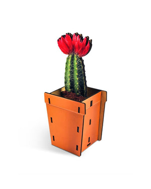 Faux Cactus Pop Up Plant
