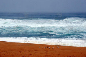 Artistic image gallery - OZBEACHES