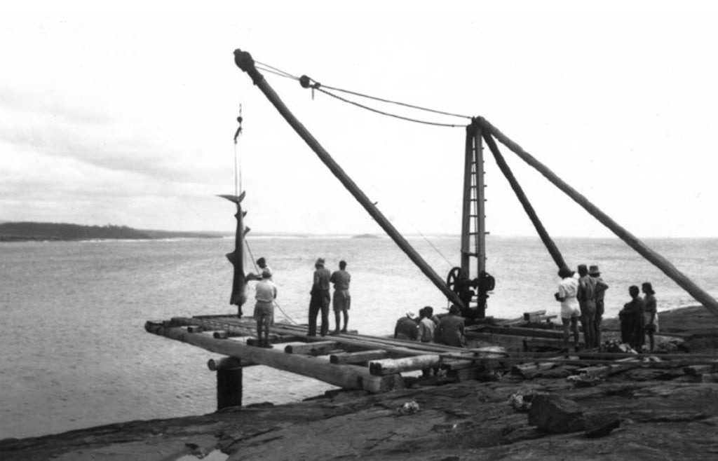 The remains of the Bawley Point sawmill crane circa 1950 (with large shark hanging off it)