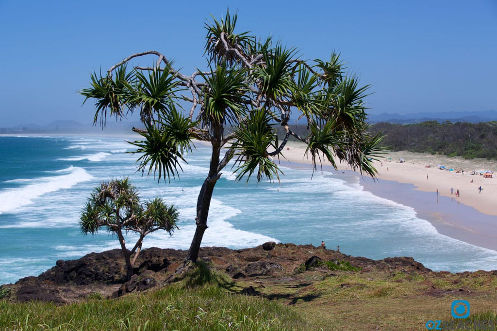 Palm tree overlooking Dreamtime Beach at Fingal Head NSW