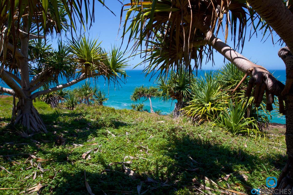 Looking through the palm trees towards the Pacific Ocean at Fingal Head in NSW