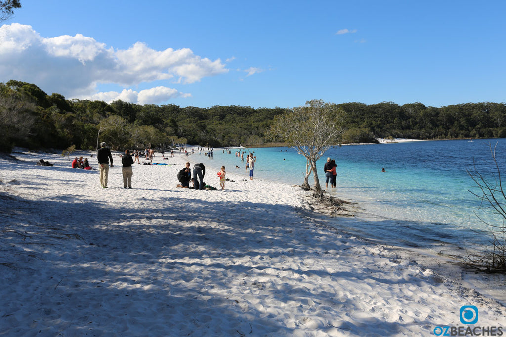 Blue Lake on Fraser Island is a popular stop off for the tour buses and gets crowded