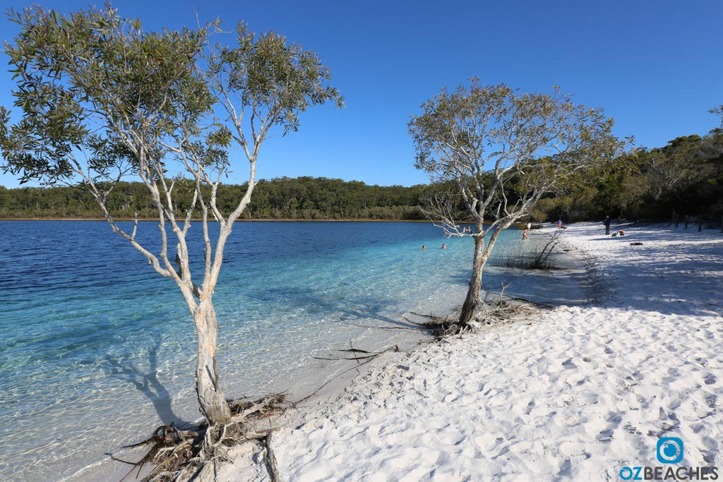 The irresistably blue waters of Blue Lake on Fraser Island