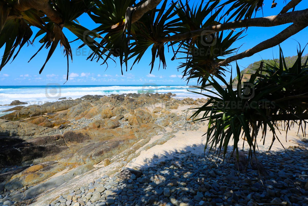 Plenty of shady spots under Pandanus Palms at Kings Beach Broken Head