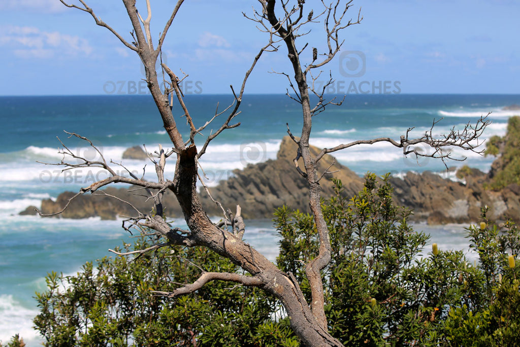 Littoral rainforest at Kings Beach at Broken Head in NSW