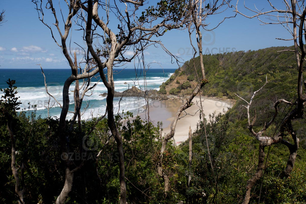 Looking through the trees along the Three Sisters track at Kings Beach at Broken Head